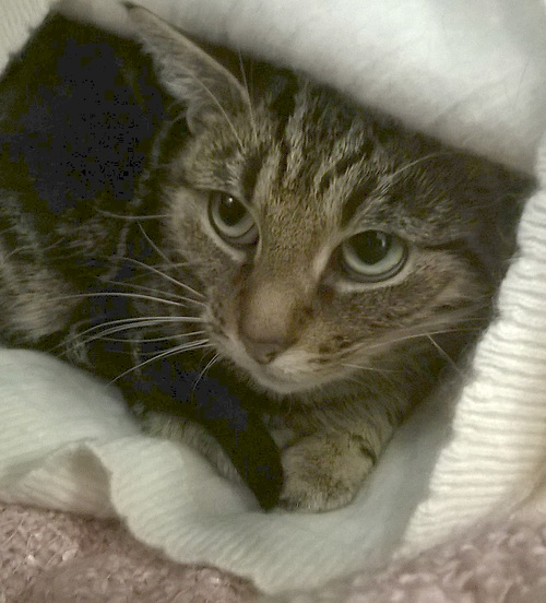 Cats Needing A Home Last Chance Animal Rescue A