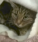 For rescue at Last Chance, Kent near Sussex, Surrey and London - ask for Cleo