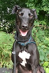 For rescue at Last Chance, Kent near Sussex, Surrey and London - ask for Monty