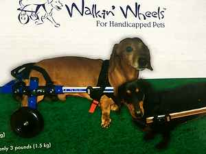 Does your dog need wheels?