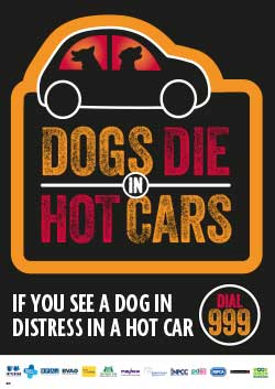 Current news news from last chance animal rescue a charity in we hope you are enjoying the lovely weather but please remember it is terribly dangerous to leave dogs or any other animals in cars and it can be fatal we publicscrutiny Gallery